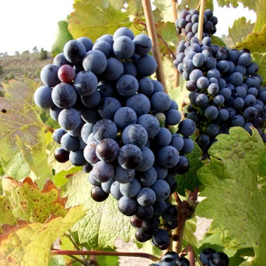 Murcia has a somewhat undiscovered wine region