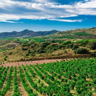 Ride your bike through Murcia's wine region